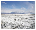 Owens Valley #2 (February 2006)